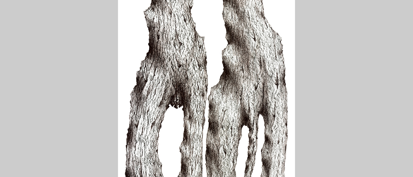 "40°25'09.3""N 3°41'12.5""W. (Plane Tree, Platanus x acerifolia). Parque del Retiro, Madrid, España. 1997. Digital Drawing by Michael Winstone"